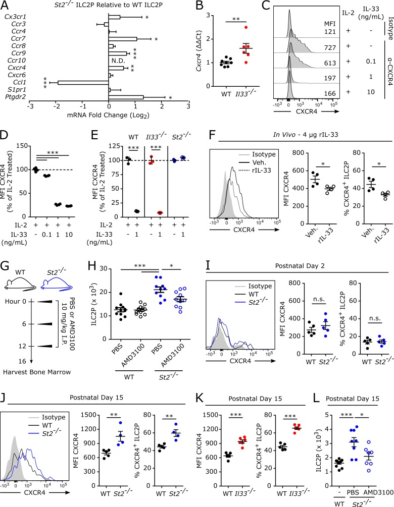IL-33 negatively regulates CXCR4 to promote efficient egress of ILC2Ps. (A) ILC2Ps were magnetically enriched and FACS-purified from the bone marrow of WT and St2 −/− mice for quantitative RT-PCR of chemokine receptors and signals. Data were normalized to a pooled set of three housekeeping genes, and differential expression was assessed by the ΔΔCt method. Data are shown as the expression level in St2 −/− ILC2Ps compared with WT ILC2Ps and are displayed as a log 2 fold change. (B) Cxcr4 expression by quantitative RT-PCR in purified ILC2Ps from WT and Il33 −/− mice. (C) Purified ILC2Ps from WT mice were treated for 24 h in vitro with IL-2 in combination with varying doses of IL-33 and assessed for CXCR4 expression. (D) Quantification of C. (E) CXCR4 expression in purified ILC2Ps from WT, Il33 −/− , and St2 −/− mice that were treated for 24 h in vitro with 1 ng/ml IL-33. For D and E, IL-2–treated WT, Il33 −/− , and St2 −/− samples are normalized to 100%, and IL-33–treated samples are displayed as a percentage of IL-2–treated samples within each genotype (WT, Il33 −/− , and St2 −/− ). (F) Mean fluorescence intensity (MFI) of CXCR4 on ILC2Ps and the percentage of ILC2Ps expressing CXCR4 in adult female mice that were treated intravenously with 4 µg rIL-33 or vehicle and killed 24 h later. (G) WT and St2 −/− mice were treated intraperitoneally with three doses of AMD3100 (10 mg/kg) or PBS vehicle given every 6 h, and bone marrow was collected for flow cytometric analysis 4 h after the final AMD3100 dose. (H) Total number of ILC2Ps in the bone marrow from adult female WT and St2 −/− mice treated as in G. (I) MFI of CXCR4 on ILC2Ps, and the percentage of ILC2Ps expressing CXCR4 in P2 WT and St2 −/− mice. (J) MFI of CXCR4 on ILC2Ps, and the percentage of ILC2Ps expressing CXCR4 in P15 WT and St2 −/− mice. (K) MFI of CXCR4 on ILC2Ps, and the percentage of ILC2Ps expressing CXCR4 in P15 WT and Il33 −/− mice. (L) Total number of ILC2Ps in the bone marrow of P15 WT and St2 −/− 