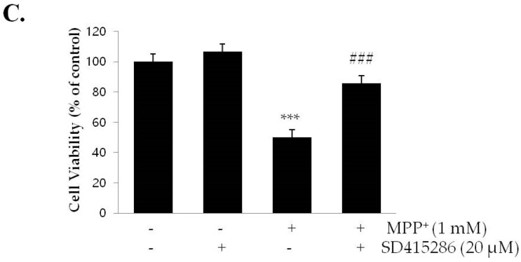 LY294002 suppresses sulfuretin-induced protection against MPP + , whereas SB415286 reverses MPP + -induced cytotoxicity. SH-SY5Y cells were pretreated with or without LY294002 (10 μM) for 2 h, followed by treatment with or without sulfuretin (40 μM) for 2 h and exposed to MPP + (1 mM) for 24 h. ( A ) Cell viability was measured by MTT assay. Values are presented relative to control as mean percentage change ± S.D. ( n = 3). ( B ) Protein levels of p-Akt, Akt, p-GSK3β, GSK3β, p-ERK, ERK, and GAPDH were determined by Western blot analysis. Representative blots and their densitometric quantification are shown. Values are presented relative to control as mean fold change ± S.D. ( n = 3). ( C ) SH-SY5Y cells were pretreated with or without SB415286 (20 μM) for 2 h, and then exposed to MPP + (1 mM) for 24 h. Cell viability was measured by MTT assay. Values are presented relative to control as mean percentage change ± S.D. ( n = 3). Differences are statistically significant at ** p
