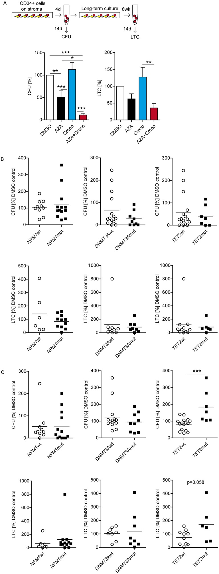 Sensitivity of primary FLT3 -ITD LIC to crenolanib is dependent on concurrent epigenetic gene mutations Experimental design: enriched CD34 + FLT3 -ITD BM cells were cultured on EL08-1D2 stroma and treated on day 1 with DMSO, 10 μM AZA, 100 nM creno or the combination thereof. Cells were harvested after 4 days. Progenitor activity was assessed by short-term colony-forming unit assay (CFU) in methylcellulose. Long-term LIC capacity (long-term culture-derived colony-forming cells, LTC) was assessed after 6 weeks on irradiated (30 Gy) EL08-1D2 cells followed by plating in methylcellulose. Colonies were scored after 14 days using standard criteria. Results are shown as mean CFU (n = 23 ± SEM) and LTC frequencies (n = 17 ± SEM) in relation to DMSO controls (A) . Response to AZA alone regarding co-mutations in NPM1 (CFU n = 23; LTC n =18), DNMT3A (CFU n = 23; LTC n =17), TET2 (CFU n = 23, upper panels; LTC n =17, lower panels) (B) . Response to creno alone regarding co-mutations in NPM1 (CFU n = 23; LTC n =18), DNMT3A (CFU n = 23; LTC n =16), TET2 (CFU n = 23; LTC n =16) (C) .