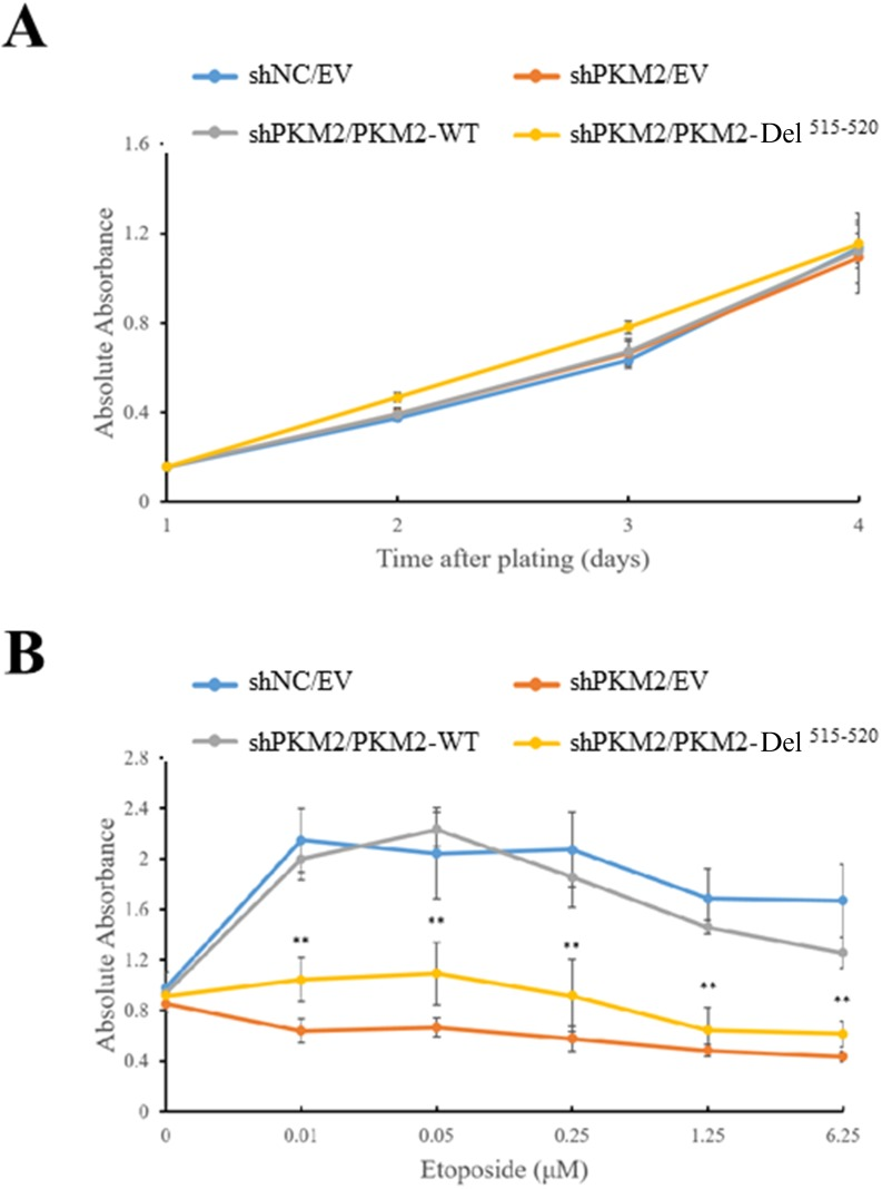 PKM2 promotes cell growth under DNA damage condition Expression of empty vector (EV), wild type (WT) PKM2 or PKM2-Del 515-520 mutant in PKM2-depleted MCF7 cells followed by treatment with (B) or without (A) etoposide. Then the cell proliferations were measured by CCK-8 assay. ** p