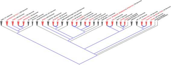 """Phylogenetic tree (slanted cladogram) of the pneumococcal genome / strains. By using the online NCBI Tools Genome Tree Report (ncbi.nlm. nih.gov/genome/tree/176 ) and the Tree Viewer 1.17.0 (ncbi.nlm. nih.gov/projects/treeview ), a phylogenetic tree was constructed from the analysis by genomic BLAST of 8290 sequencing projects of pneumococci reported in the NCBI database. The topology of this slanted cladogram showed different pneumococcal lineages, where the selected set of 25 pneumococcal strains can be identified in red as external nodes (the """"well-distributed"""" key features also highlighted in red), evidencing an optimal representation of the pneumococcal population. The overall number of sequenced pneumococcal genomes is provided for each external node. The blue lines depicted those external nodes where fully sequenced and annotated genomes are located"""