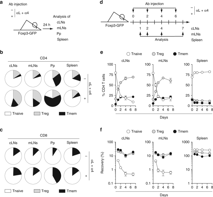Analysis of residual T cells after blocking T cell entry into LNs and Peyer's Patches. a – c 6–12-week-old C57BL/6 Foxp3-GFP mice were injected or not i.p. with 200 μg of anti-LFA-1 (αL) and anti-VLA-4 (α4) Abs. Twenty-four hours later, cLNs, mLNs, Pp, and spleen were harvested and analyzed. a Diagram illustrating the experimental model. b Distribution of Treg, Tmem, and Tnaive cells among CD4 T cells in the indicated SLOs of treated or untreated mice. c Distribution of Treg, Tmem, and Tnaive cells among CD8 T cells in the indicated SLOs of treated or untreated mice. d , e 6–12-week-old C57BL/6 Foxp3-GFP mice were injected or not i.p. with 200 μg of anti-LFA-1 (αL) and anti-VLA-4 (α4) Abs every 2 days from day 0 to day 6 and SLOs were recovered for analysis at various time-points. d Experimental model. e Percentages of Treg, Tmem, and Tnaive cells among CD4 T cells are shown as means ± SEM for the indicated SLOs. f Relative absolute numbers of CD4 Treg, Tmem, and Tnaive cells in cLNs, mLNs, and spleen are shown. The percentage of recovery was calculated by dividing the absolute numbers in treated mice by the mean absolute number obtained in untreated animals. Data are means ± SEM for at least three independent experiments. Mouse clip arts were generated in ref. 21