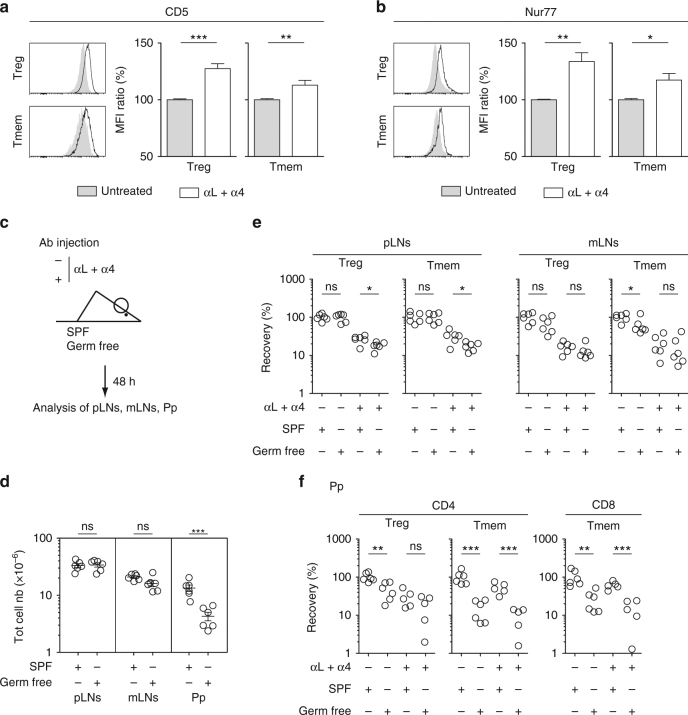 Assessing the relative role of self antigens and microbiota in T cell residence in SLOs. a – c 6–12-week-old C57BL/6 Foxp3-GFP mice were injected or not i.p. with 200 μg of anti-LFA-1 (αL) and <t>anti-VLA-4</t> (α4) Abs. Forty-eight hours later, peripheral lymph nodes (pLN) were harvested and analyzed. CD5 ( a ) and Nur77 ( b ) fluorescence histograms of CD4 Treg and CD4 Tmem cells from the pLNs of a representative treated and a representative control C57BL/6 Foxp3-GFP mouse. Quantification is shown as means ± SEM with unpaired t -test on the right part of these panels. c – f 6–8-week-old SPF or germ-free C57BL/6 mice were injected or not i.p. with 200 μg of anti-LFA-1 (αL) and anti-VLA-4 (α4) Abs. Forty-eight hours later, SLOs were harvested and analyzed. c Diagram illustrating the experimental model. d Total cell numbers recovered from pLNs, mLNs, and Peyer's patches (Pp) of SPF or germ-free mice. e Recovery of CD4 Treg and CD4 Tmem cells in pLNs and mLNs. f Recovery of CD4 Treg, CD4 Tmem and CD8 Tmem cells in Peyer's patches (Pp). Each dot represents an individual mouse (unpaired t -test). * p