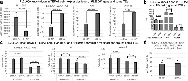 Knockdown of PL2L60A in TERA1 cell line leads to transcriptional upregulation of transposable elements. a , Transcription level of PL2L60A gene and the following retrotransposons: full-length L1HS/L1PA2/L1PA3s, all Alu elements, AluYa5 subfamily. b , Fraction of TE-deriving small RNAs for full-length L1HS/L1PA2/L1PA3s, all Alu elements, AluYa5 subfamily. c , Chromatin modifications (H3K4me3 and H3K9me3) around all Alu elements, AluYa5 subfamily, and 5'UTR promoter of full-length L1HS/L1PA2/L1PA3. d , DNA methylation level around 5'UTR promoter of full-length L1HS/L1PA2/L1PA3 TEs. The graphs show mean and standard deviation across three biological replicates. P-value for two-tailed Mann-Whitney test is presented (n.s. – non-significant). scRNA – control scrambled RNA, siRNA – anti-PL2L60A siRNA