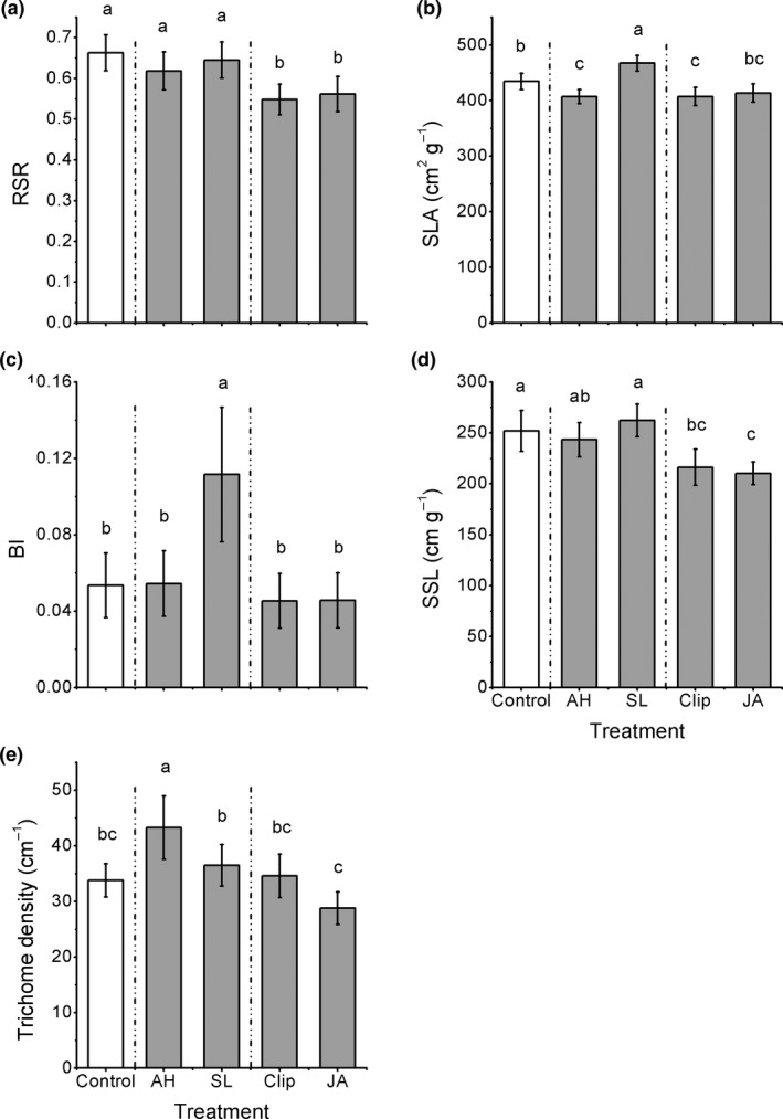Effect of the induction treatments on morphological traits of Alternanthera philoxeroides , including (a) root:shoot ratio (RSR), (b) branching intensity (BI), (c) specific leaf area (SLA), (d) specific stem length (SSL), and (e) trichome density. AH , Agasicles hygrophila damage, SL , Spodoptera litura damage, Clip, clipped leaves, JA, exogenous jasmonic acid. Data are means ± 1 SE , and different letters indicate significant differences among means following LSD‐adjusted post hoc contrasts