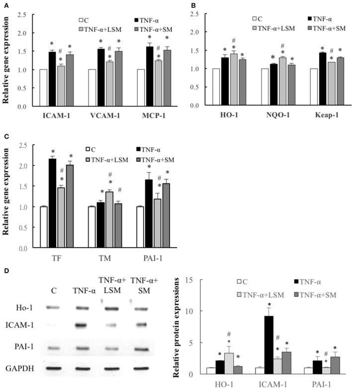 Determination of inflammation, ROS induction, and thrombosis-related gene and protein expression. Expression of (A) inflammation-related ICAM-1, VCAM-1 , and MCP-1 genes, (B) ROS induction–related HO-1, NQO-1 , and Keap-1 genes and (C) thrombosis-related TF, TM , and PAI-1 genes were all significantly increased in the TNF-α group compared to in the control group. Gene expression levels of ICAM-1, V-CAM-1, MCP-1, Keap-1, TF , and PAI-1 were attenuated significantly by LSM treatment compared to those in the TNF-α group, but similar trends were not observed in the TNF-α+SM group. However, gene expression of HO-1, NQO-1 , and TM were significantly enhanced by LSM treatment compared to those in the TNF-α group, but similar trends were not observed in the TNF-α+SM group. (A–C) Data are expressed as the mean ± S.E.M. ( n = 3). * p
