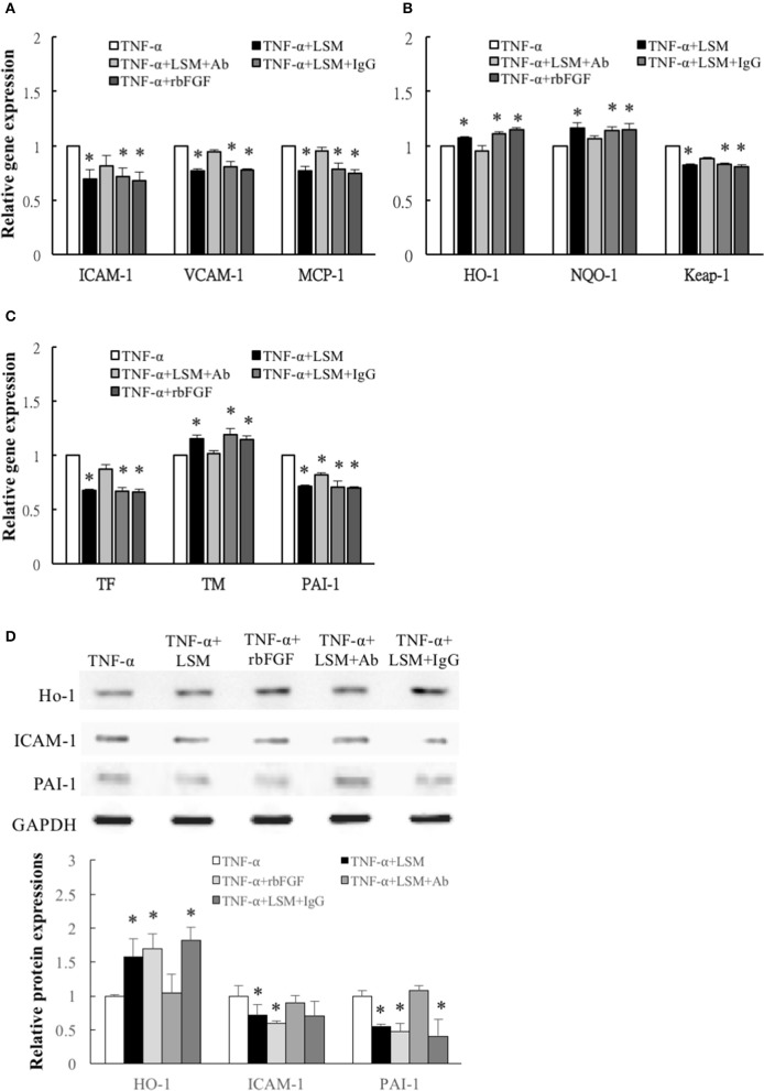 Determination of inflammation, ROS induction, and thrombosis-related gene and protein expression. (A) Inflammation related ICAM-1, VCAM-1 , and MCP-1 genes, (B) ROS induction related Keap-1 genes, and (C) thrombosis-related TF and PAI-1 genes were attenuated significantly in the TNF-α+LSM, TNF-α+LSM+IgG, and TNF-α+rbFGF groups compared to in the TNF-α groups. Significant attenuation of ICAM-1, VCAM-1, MCP-1, TF , and Keap-1 were not observed in the TNF-α+LSM+Ab groups. Additionally, ROS induction-related antioxidant HO-1, NQO-1 and anti-thrombotic TM gene levels were enhanced in the TNF-α+LSM, TNF-α+LSM+IgG, and TNF-α+rbFGF groups compared to in the TNF-α groups. (A–C) Data are expressed as the mean ± S.E.M. ( n = 3). * p