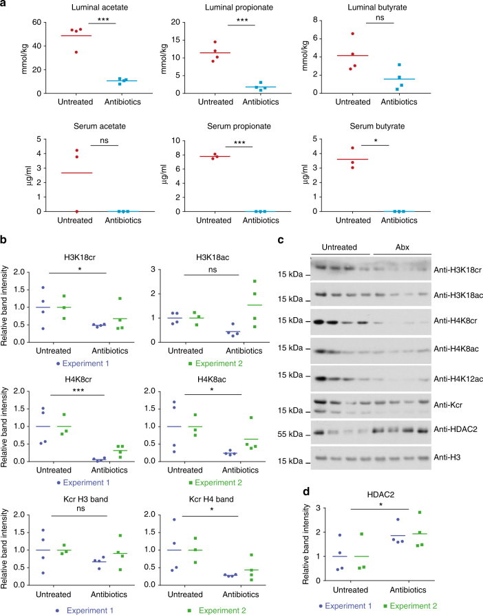 Microbiota depletion affects colonic histone crotonylation and HDAC2. Antibiotic treatment led to a decrease in luminal and serum SCFA levels in mice ( n ≥ 3, from experiment 2). a Acetate, propionate, and butyrate concentrations were measured in the colon lumen and serum by gas chromatography. Unpaired t -tests were conducted, * p- value