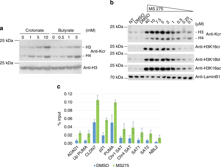 Butyrate and class I HDAC inhibition promote histone crotonylation. a Western blot analysis with indicated antibodies of whole cell extracts of small intestinal organoids treated for 48 h with indicated amounts of SCFAs. Representative western blot of two repeat experiments. b HCT116 cells were treated with MS275 or DMSO (vehicle) for 18 h, whole cell extracts collected, and analyzed by western blot using indicated antibodies; anti-Kcr: anti-crotonyl-lysine antibody, NT: not treated. c Increase in histone H3K18cr over promoters of indicated genes and repetitive, heterochromatic sites (alpha-satellite sequences, NBL2) upon MS275 treatment of HCT116 cells for 18 h. Summary of ChIP-qPCR data of three repeat experiments, error bars are SEM