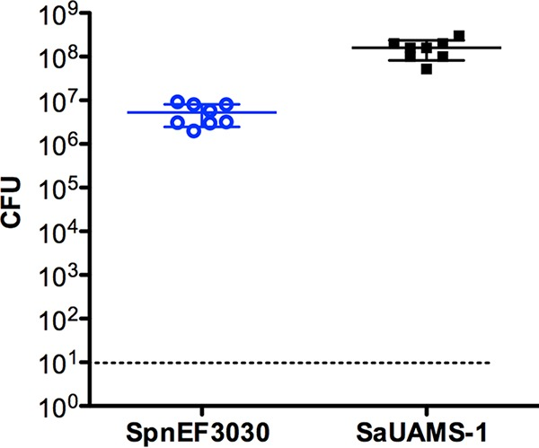 S. pneumoniae EF3030 and S. aureus UAMS-1 form dual-species biofilms in vitro . Biofilm-associated EF3030 and UAMS-1 were enumerated from cocultured biofilms after 48 h ( n = 8). Both species of bacteria were recovered from each well. The dashed line indicates the limit of detection. Solid bars are means ± standard deviations.