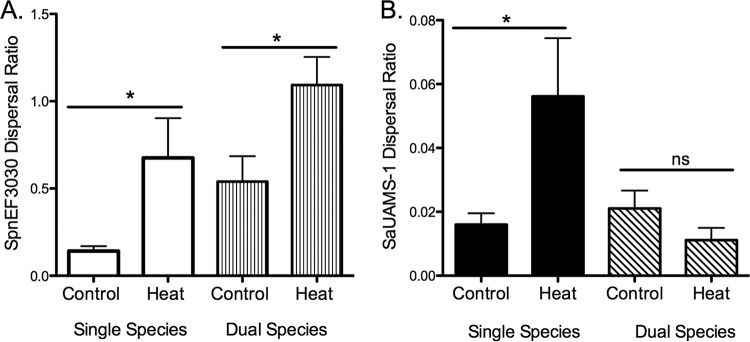 In vitro dispersal of 48 h S. pneumoniae EF3030 (A) and S. aureus UAMS-1 (B) single-species and dual-species biofilms following 4 h of heat treatment (38.5°C). Dispersal values are presented as the ratio of supernatant to biofilm from a minimum of four independent experiments (means ± standard errors of the means). Statistical analysis of the effect heat dispersal compared to controls was performed with the unpaired Student t test. *, P