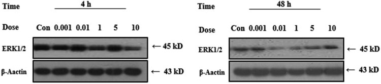 Effects of PCB118 on human lungs fibroblast (HELF) cell and extracellular signal-regulated kinase 1/2 (ERK1/2) protein expression.