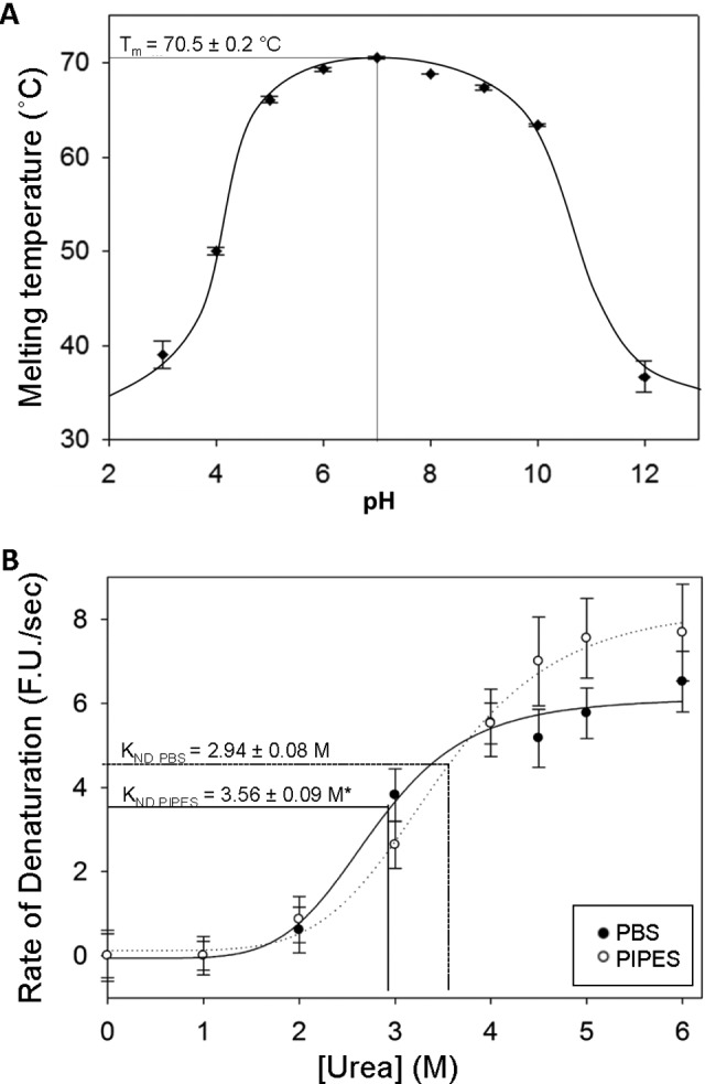 The effect of buffer species and environmental pH on immunoglobulin G (IgG) stability against denaturation by heat and urea. A, Unfolding temperatures ( T m ) of human IgG over a range of pH conditions in various buffers (see Table 1 for list) as determined by differential scanning fluorimetry (DSF) with a heating rate of 0.5°C/30 s. Optimal thermal stability of IgG was observed at pH 7.0, with a stable range of pH 5.0 to 10.0. B, Effect of buffer species on the velocity of denaturation of IgG as determined by the rate of <t>SYPRO</t> Orange fluorescence increases at various concentrations of urea. Immunoglobulin G samples were incubated at 4°C in either phosphate-buffered saline <t>(PBS)</t> or 1,4-Piperazinediethanesulfonic acid (PIPES) buffer (both pH 7.0), with various concentrations of urea. An asterisk (*) indicates significantly different from the PBS value ( P