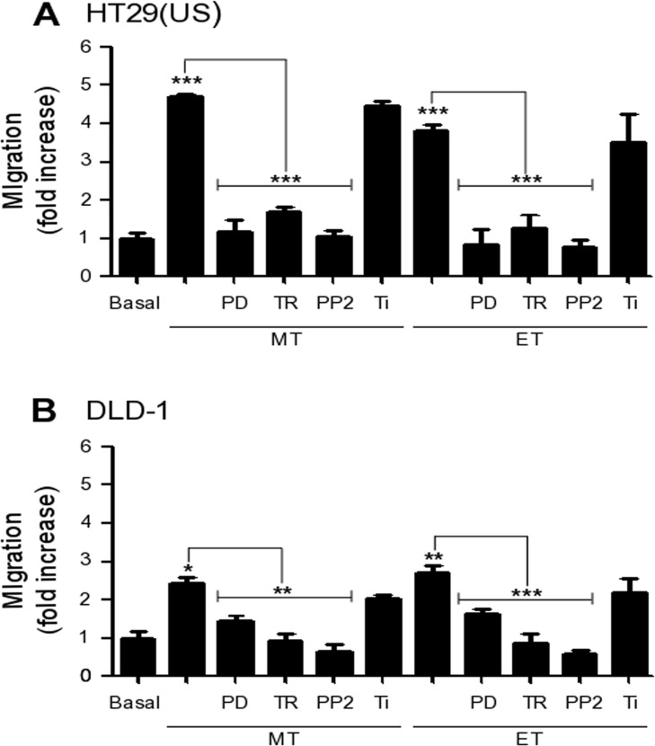 Effect of MEK and Src family kinase inhibition, as well as the anti-oxidants Trolox and Tiron on cell migration induced by Methotrexate and Etoposide (A) HT29(US) or (B) DLD-1 cells (6 x 10 5 ) were seeded in 6 cm plates 24 h before treatment with the MEK inhibitor PD98059 (PD, 50 μM), the Src family kinase inhibitor PP2 (1 mM), the vitamin E analog Trolox (TR, 2 mM) or the superoxide scavenger Tiron (Ti, 4 mM) for 30 min (PD, TR and Ti) or 1 h (PP2) before treatment with 100 nM Methotrexate or 10 μM Etoposide for 48 h. Cells (2 x 10 5 ) were then seeded in Boyden chambers coated with fibronectin (2 μg/ml) and allowed to migrate for 7 h (HT29(US) cells) or 5 h (DLD1 cells). The cells that migrated through the pores were stained and counted. Values were normalized to those obtained for cells without treatment (Basal). The graphs show the averages of results from 3 independent experiments (mean ± SEM). Significant differences are indicated *** p ≤ 0.001, ** p ≤ 0.01, * p ≤ 0.05.