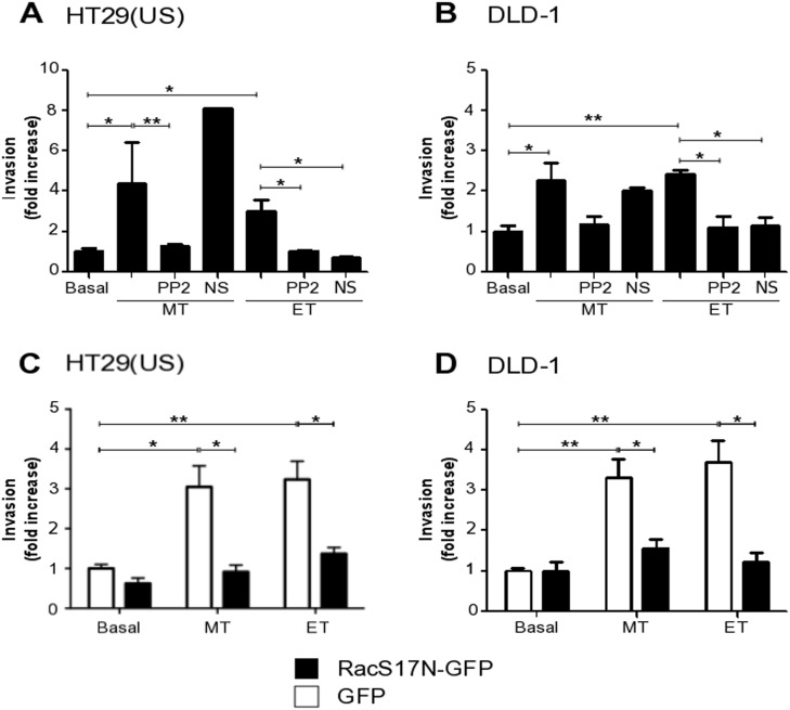 Methotrexate and Etoposide increase cancer cell invasion in a Src family kinase and Rac1 dependent manner (A) HT29(US) or (B) DLD1 (6 X 10 5 ) cells were seeded in 6 cm plates 24 h before pre-treatment with either the Src family kinase inhibitor, PP2 (1 mM) or with the Tiam1 inhibitor, NS (NSC 23766, 100 mM) for 60 min followed by the treatment with 100 nM Methotrexate (MT) or 10 μM Etoposide (ET) for 48 h. (C) HT29(US) or (D) DLD1 (6 X 10 5 ) cells were transfected with GFP (white bars) or with the Rac1 dominant-negative, RacS17N (black bars), 24 h before the treatment with 100 mM Methotrexate (MT) or 10 μM Etoposide (ET) for 48 h. Then, cells (2 x 10 5 ) were seeded in Matrigel-coated chambers and allowed to invade the matrix for 24 h. The cells that accumulated on the lower surface of the membrane were then stained and counted. Values obtained were normalized to those obtained for cells without treatment (Basal). The graphs show the averages of results from 3 independent experiments (mean ± SEM). Significant differences are indicated, ** p ≤ 0.01, * p ≤ 0.05.