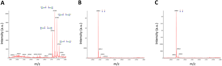 Confirmation of oligosaccharide structure on rituximab after ENGase treatment. LC-MS analysis was performed on the following samples: ( A ) rituximab without ENGase treatment ( B ) treated with ORF1188 and ( C ) treated with Cordyceps ENGase. Note that the single peak derived from GlcNAc-fucose was observed in samples ( B ) and ( C ), but not in sample ( A ).