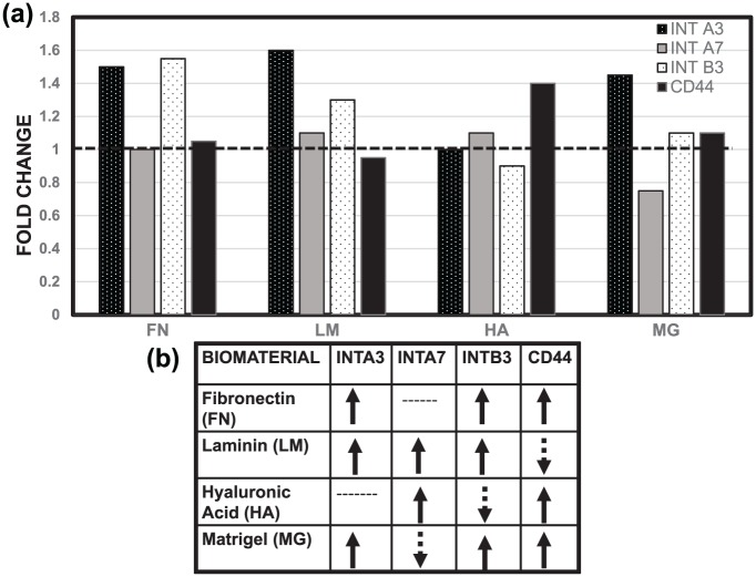 Differences in gene expression of adhered RPCs. Fold change in regulation of the genes ITGA3, ITGA7, ITGB3, and CD44 that encode (a) integrin α3, integrin α7, integrin β3, and CD44 upon adhesion with fibronectin (FN), laminin (LM), hyaluronic acid (HA), and Matrigel (MG). (b) Schematic representation of up- and down-regulation of encoding genes as measured via the ΔΔCT method.
