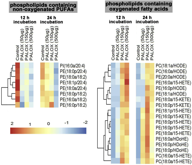 Analysis of selected phospholipid species formed when A549 cells were treated with purified PA-LOX. A549 cells were incubated in the presence/absence of varying amounts of PA-LOX (50 μg, 150 μg, 500 μg/ml) for 12 h and 24 h. Lipid extracts were analyzed by reverse-phase LC/MS/MS, in negative mode, using Luna column on 6500 Q Trap. Single incubations were carried out for each PA-LOX concentration. Each sample was analyzed once by RP-HPLC and in triplicate LC-MS/MS.