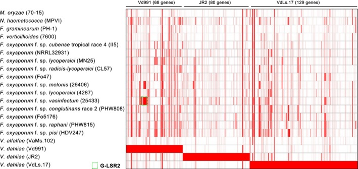 Homology analysis of lineage‐specific ( LS ) genes between Verticillium <t>dahliae</t> and Fusarium spp. Identity matrix of <t>Vd991</t> LS genes and Fusarium spp. genes. The matrix was constructed using protein‐coding genes from Vd991 that had higher identities with Fusarium spp. genes than with the two other V. dahliae genes. The color gradient from white to red represents identities from 0 to 100%.