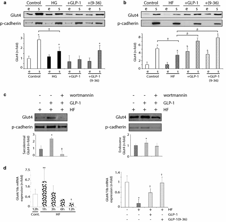 GLP-1 and GLP-1(9-36) increased endosomal and sarcolemmal Glut4 in hyperlipidemic <t>cardiomyocytes.</t> Glut4 expression in endosome- (e) and sarcolemmal (s)-enriched fractions of a HG- and b HF-stimulated <t>C2C12.</t> Some cells were pre-treated with GLP-1 or GLP-1(9-36). *p