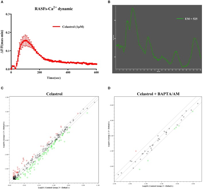 (A) Celastrol induced calcium dynamic change in RASFs. Cells treated with 1 μM celastrol were loaded with FLIPR Calcium 6 dye. Real time Ca 2+ kinetic was monitored with FLIPR Tetra instrument. Data from the chart represent mean values ± SD. of three independent experiments. (B) Single cell imaging visualized celastrol-mobilized cytosolic calcium level in RASFs. Cells treated with 1 μM celastrol were loaded with FLIPR Calcium 6 dye. Calcium signal was monitored by Applied Precision DeltaVision Elite in real-time mode (see Supplementary Video ). Chart represents the mean intensity of fluorescence signal at 525 nm. (C) Scatter plot for inflammatory and immunity genes fold regulation values from celastrol stimulated RASFs relative to unstimulated RASFs (Control): genes not regulated (black), up-regulated genes (red), and down-regulated genes (green) with threshold lines of 1.5 and −1.5. (D) Scatter plot for the genes identified as up-regulated or down-regulated with celastrol treatment (in C). Dots represent the genes fold regulation values from RASFs treated with celastrol and BAPTA/AM relative to untreated control: genes not regulated (black), up-regulated genes (red), and down-regulated genes (green) with threshold lines of 1.5 and −1.5 (Ct