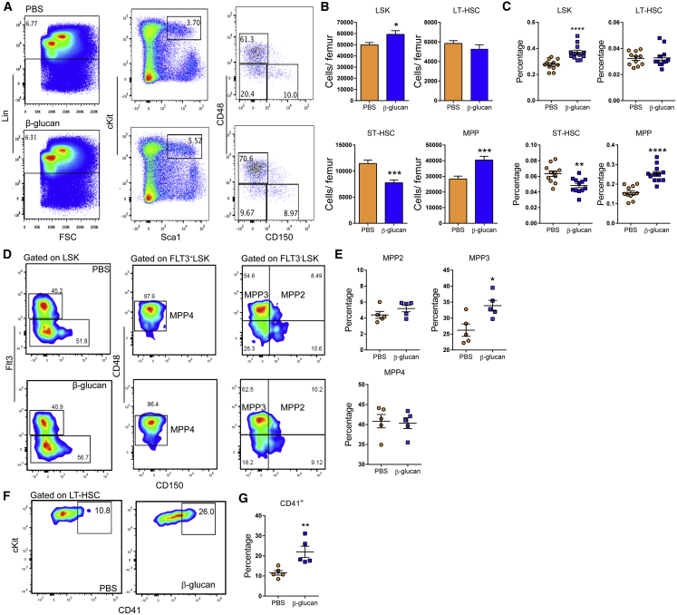 Administration of β-Glucan Drives Expansion of HSPC Subpopulations WT mice were injected with β-glucan or PBS, and BM analysis was performed after 24 hr. (A) Representative fluorescence-activated cell sorting (FACS) plots for the identification of hematopoietic progenitor cells. After gating for Lin − cells, LSK cells were characterized as cKit + Sca1 + cells. LSK cells subpopulations were further characterized as MPP (CD48 + CD150 − LSK), ST-HSC (CD48 − CD150 − LSK), and LT-HSC (CD48 − CD150 + LSK). (B and C) Cell numbers of LSKs, MPPs, ST-HSCs, and LT-HSCs (B) and cell percentages of the same populations in total BM cells (C) of mice at 24 hr after the administration of PBS or β-glucan (ns = 11 and 12 mice). (D) Representative FACS plots for the identification of MPP subpopulations. After gating for LSK cells, MPP4 cells are characterized as CD48 + Flt3 + CD150 − LSK, MPP3 cells are characterized as CD48 + Flt3 − CD150 − LSK, and MPP2 cells are characterized as CD48 + Flt3 − CD150 + LSK. (E) Frequency of MPP subpopulations in LSK cells in the BM of mice at 24 hr after the administration of PBS or β-glucan (n = 5 mice per group). (F and G) Representative FACS plots for the identification of CD41 + LT-HSCs (F) and frequency of CD41 + LT-HSCs (in total LT-HSCs) (G) in the BM of mice at 24 hr after the administration of PBS or β-glucan (n = 5 mice per group). Data are presented as mean ± SEM. ∗ p