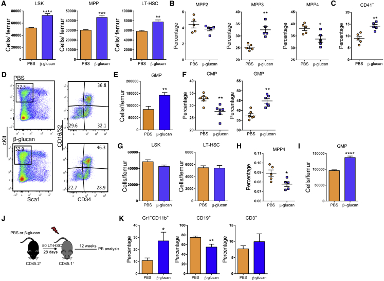 Sustained Increase in Myelopoiesis upon β-Glucan Administration (A–F) WT mice were injected with β-glucan or PBS, and BM analysis was performed after 7 days. (A) LSK, MPP and LT-HSC cell numbers in the BM of mice on day 7 after administration of PBS or β-glucan (n = 6 mice per group). (B) Frequency of MPP subpopulations in the LSK cells 7 days after β-glucan or PBS administration (n = 5 mice per group). (C) Frequency of CD41 + LT-HSCs (in total LT-HSCs) on day 7 after the administration of PBS or β-glucan (n = 5 mice per group). (D) Representative FACS plots for the identification of MyP subpopulations. (E and F) GMP cell numbers (E) and frequency within the MyP pool of GMPs (Lin − c-Kit + Sca1 − CD16/32 + CD34 + ) and CMPs (Lin − c-Kit + Sca1 − CD16/32 − CD34 + ) (F) in the BM of mice on day 7 after the administration of PBS or β-glucan (n = 6 mice per group). (G–I) WT mice were injected with β-glucan or PBS, and BM analysis was performed after 28 days. (G) LSK and LT-HSC cell numbers (n = 5 mice per group). (H and I) Frequency of MPP4 cells in total BM cells (H) and GMP cell numbers in the BM (I) of mice on day 28 after the administration of PBS or β-glucan (n = 5 mice per group). (J and K) Transplantation. (J) LT-HSCs (CD45.2 + ) were sorted 28 days after β-glucan or PBS administration and transplanted to lethally irradiated SJL/BL6 (CD45.1 + ) mice. CD45.1 + BM cells were co-transplanted in order to ensure the survival of recipients. (K) Lineage output of donor LT-HSCs (CD45.2 + ) in peripheral blood of recipients at week 12 post-transplant (n = 10 recipient mice per group). Data are presented as mean ± SEM. ∗ p