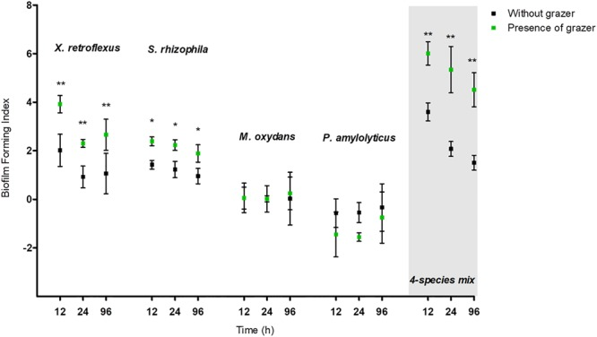 Biofilm forming index (BFI) of mono and mixed species cultures subject to Tetrahymena pyriformis (Tp) grazing and non-grazed cultures at 12, 24, and 96 h. The data points indicate the biofilm mean ± standard error of the mean (SEM) obtained from five biological replicates. ∗ P