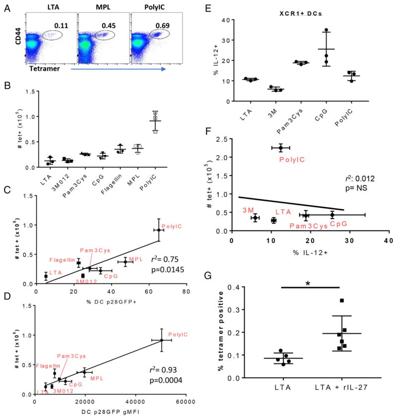 The magnitude of IL-27 produced by cDC1 cells predicts the magnitude of the vaccine adjuvant-elicited CD8 +  T cell response Mice were immunized i.v. with OVA plus the indicated adjuvants. Seven days later, the spleens were harvested and stained with SIINFEKL–MHC class I K b  tetramers, as previously described ( 20 ), to identify OVA-specific T cells. ( A ) Representative dot plots showing tetramer staining on all live singlet B220 − CD8 + CD3 +  spleen cells isolated from mice immunized with the indicated adjuvants. ( B ) Quantification of T cell data shown in (A) after immunization with the indicated adjuvants. Error bars indicate SD derived from three mice each. ( C  and  D ) The number of tetramer +  T cells generated by each adjuvant, as shown in (B), was plotted against eGFP gMFI of cDC1 cells (C) or the percentage of eGFP +  cDC1 cells (D) 6 h postimmunization with each adjuvant, as shown in  Fig. 3 .  r 2  and  p  values were determined by linear regression analysis (Prism). ( E ) Mice were challenged with the indicated innate stimuli, and the splenocytes were isolated at 6 h, as in  Fig. 3 . Spleens were incubated in vitro for 6 h in the presence of brefeldin A, after which they were stained to identify XCR1 +/−  DCs, as in  Fig. 2 . The cells were then fixed, permeabilized, and stained for intracellular IL-12. The percentage of IL-12 +  XCR1 +  DCs is shown. ( F ) Tetramer +  T cell numbers in the spleen 7 d after immunization with the indicated adjuvants were plotted against the percentage of IL-12 +  cells shown in (E).  r 2  and  p  values were determined by linear regression analysis (Prism). Data in (E) and (F) are from one of two experiments performed. ( G ) Mice were immunized with OVA + LTA, as in (A), with or without the addition of 10 μg of rIL-27. T cell responses were measured as in (A) and (B). * p