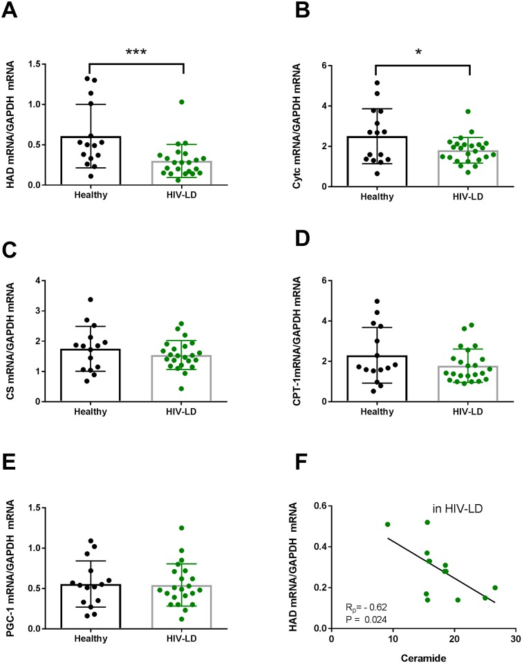 Patients with HIV-Lipodystrophy have reduced levels of HAD mRNA (A) and Cytochrome c mRNA (B) in skeletal muscle, but no difference in citrate synthase mRNA (C), CPT-1 mRNA (D) and PGC-1 mRNA (E). HAD mRNA correlated negatively to the ceramide content (F). The levels of genes were calculated with GAPDH as a housekeeping gene. In the dot plots data for each subjects are given and the line represent means and SD. * P