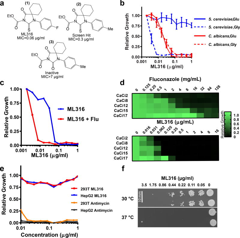 ML316 is a potent, highly selective fungicide ( a ) Structures of ML316, original screen hit and inactive analog. Minimal inhibitory concentrations (MIC) are indicated for the C. albicans strain CaCi-2. For ML316 1 µM = 0.35 µg/ml. ( b ) Glucose-grown S. cerevisiae are not sensitive to ML316. Standard antifungal susceptibility testing was performed in YNB-CSM media with either glucose (Glu, 2% w/v) or glycerol (Gly, 2% w/v) as the carbon source. Optical densities were measured after 24 h at 30 °C and standardized to drug-free controls. The mean of three independent wells is shown. Error bars: s.e.m. ( c ) ML316 reduces growth of fluconazole-resistant C. albicans (strain CaCi-2), an effect that is increased by fluconazole (Flu). Assays in the presence or absence of Flu (8 µg/ml) were performed as in (b) except growth medium was RPMI supplemented with 2% glucose. The mean of two independent wells is shown. ( d ) ML316 inhibits growth of increasingly azole-resistant C. albicans strains isolated from the same HIV-infected patient over a 2-year interval. Strain designations are indicated to the left of the heat maps. Sensitivity testing was performed as in ( c ). The mean of results from two independent experiments is depicted. ( e ) ML316 is not cytotoxic to human cell lines under respiratory conditions. Viability was assessed by standard resazurin dye-reduction assay after 72 h growth at 37 °C in DMEM supplemented with galactose (10 mM) and dialyzed fetal bovine serum (10%). Data points depict the mean of measurements from 2 independent wells for each condition tested. ( f ) ML316 is fungicidal. A standard growth assay was performed as in ( c ) at either 30 or 37 °C. After 24 h, aliquots were spotted onto YPD agar plates and cultured for an additional 2 days. Scale bar = 10 mm. Data in ( c ), ( e ), and ( f ) are derived from one representative experiment. Two independent experiments yielding similar results were performed.