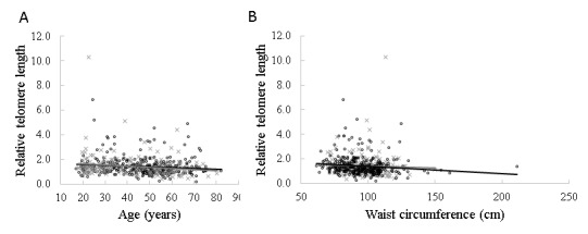 Correlation of relative telomere length with age and waist circumference Scatter plots showing the correlation of age ( A ) and waist circumference ( B ) with the relative telomere length of peripheral leucocyte blood respectively in males and females. The grey line and (×) represent the males (n=178) and the black line and (o) represent the females (n=319). The P -values were calculated from the linear regression analyses of the relationships between age, waist circumference and RTL in males and females, and the Pearson correlation was used.