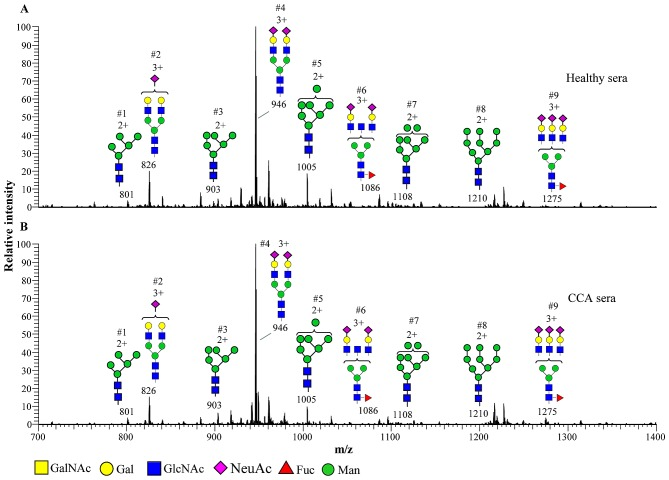 MS spectra of permethylated N -linked glycans in the serum of patients with CCA compared with healthy controls, as detected using NSI-MS. Glycans released from the serum of patients with CCA and healthy controls were permethylated and analyzed. MS spectra present the predominance of the complex type and high-mannose type oligosaccharides in (A) healthy sera vs. (B) CCA sera. The glycan profiles (A vs. B) demonstrate similar glycan patterns, but they differ in their relative quantities. Glycans were detected as doubly [2+] and triply charged species [3+]. The graphical representation of monosaccharide residues are defined in the figure and are consistent with the suggested nomenclature of the Consortium for Functional Glycomics ( http://glycomics.scripps.edu/CFGnomenclature.pdf ). MS, <t>mass</t> spectrometry; CCA, cholangiocarcinoma; NSI-MS, nanospray <t>ionization-linear</t> <t>ion</t> <t>trap</t> mass spectrometry; m / z , mass/charge ratio; Glc, N-acetylglucosamine.