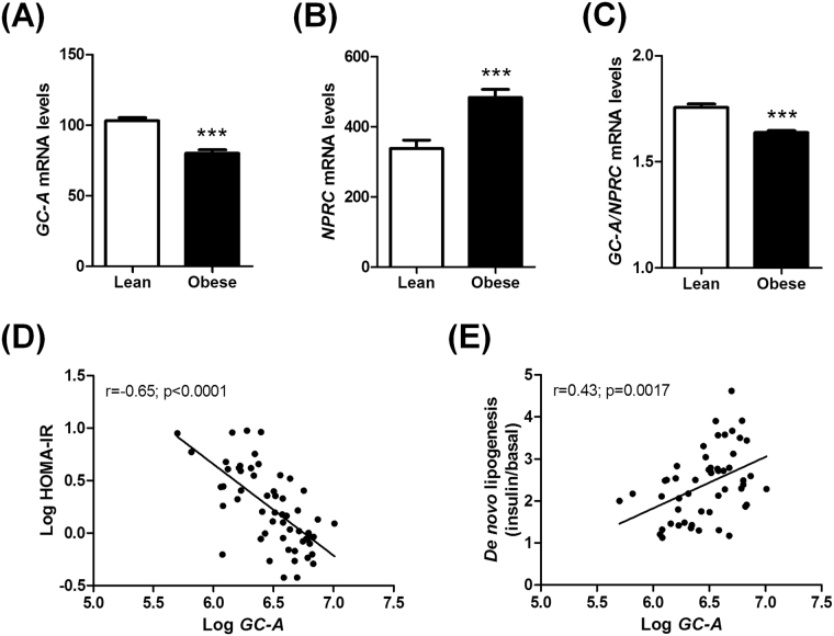 Human adipose tissue gene expression from microarrays of GC-A ( A ), NPRC ( B ), and the ratio of GC-A -to- NPRC ( C ) in lean versus obese individuals from cohort 2 (n = 56). Correlation between adipose GC-A expression and HOMA-IR ( D ) and de novo lipogenesis measured in isolated adipocytes ( E ). ***p