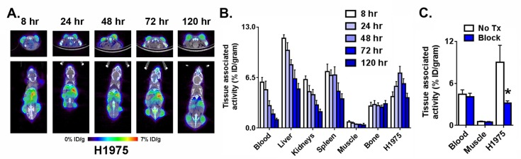 Defining the optimal time after injection to study PD-L1 expression levels in a xenograft model. (A) Representative coronal and transaxial PET/CT images of male nu/nu mice bearing subcutaneous H1975 tumors, a human model of NSCLC , show that peak tumor uptake of 89 Zr-C4 occurs 48 h after injection. (B) Biodistribution data also show peak tumor uptake of the radiotracer 48 h after injection. High uptake is also observed in PD-L1 positive tissues like the liver a spleen. (C) Representative data from a blocking study acquired 48 h after injection show the tumor specific uptake of 89 Zr-C4. Blocking was performed with 30-fold excess C4. Radiotracer uptake exceeded that observed in the blood pool and muscle: (∗) P