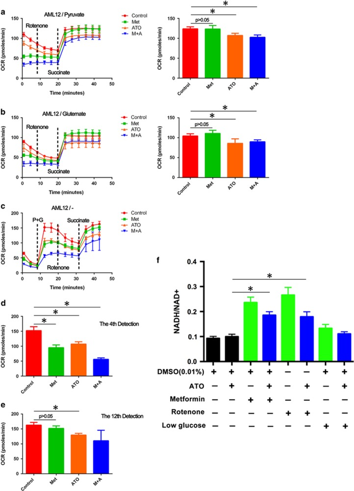 Effects of metformin and ATO on mitochondrial complex I and the NADH/NAD + ratio in AML12 cells. The AML12 cells were pretreated with metformin (5 mM) and/or ATO (6 μ M) for 5 h. Then, the media was replaced by the modified DMEM (Seahorse Bioscience) with pyruvate ( a ) or glutamate ( b ). Rotenone was added to abrogate the function of complex I, and succinate was further added to activate the OCR. The values of the last detection are represented as the means±S.D. (6 replicates for per group). ( c ) The media was replaced by the modified DMEM (Seahorse Bioscience) without any substrate of the mitochondrial respiratory chain. Then, pyruvate and glutamate were added to activate the OCR of AML12 cells. Rotenone was added to abrogate the function of complex I, and succinate was further added to activate the OCR. The values of the fourth ( d ) and last ( e ) detections are represented as the means±S.D. (six replicates for per group). ( f ) The NADH/NAD + ratios in AML12 cells treated with the agents ATO, metformin, rotenone, ATO+metformin and ATO+rotenone or cultured with low glucose DMEM/F12 and/or ATO for 24 h were detected. The values are represented as the means±S.D. (three replicates for per group; * P