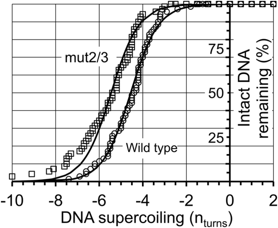 dsDNA is nicked by RepD only when it is subjected to negative supercoiling. Beads that were tethered to the surface by a single, 4-kb, dsDNA molecule were identified by the characteristic change in DNA length upon supercoiling (n obs = ~70). The DNA molecules were then positively supercoiled by +20 turns before 100 nM RepD was added to the experimental flow-cell. All DNA molecules remained intact until they were subjected to small levels of negative supercoiling. After −4.5 ± 0.1 turns (±SEM) of negative supercoiling (σ = −1.2%), 50% of the DNA molecules with the wild type oriD sequence (circles) were nicked by RepD. The oriD mutant mut2/3 (squares), had the 50% nicking threshold at −5.6 ± 0.2 turns. Experiments were at F = 0.4 pN and 23 °C. The exact level of supercoiling for each DNA molecule was corrected for its initial starting offset due to thermal motion (see main text for details). At low levels of supercoiling, the elastic energy (Δwork) due to changes in DNA torque and secondary structure formation approximates to the function: \documentclass[12pt]{minimal} \usepackage{amsmath} \usepackage{wasysym} \usepackage{amsfonts} \usepackage{amssymb} \usepackage{amsbsy} \usepackage{mathrsfs} \usepackage{upgreek} \setlength{\oddsidemargin}{-69pt} \begin{document}$$\frac{C}{2{{\rm{l}}}_{{\rm{O}}}}[{(2{\rm{\pi }}{\rm{n}}+2{\rm{\pi }}h)}^{2}-{(2{\rm{\pi }}{\rm{n}})}^{2}]$$\end{document} C 2 l O [ ( 2 π n + 2 π h ) 2 − ( 2 π n ) 2 ] where C is DNA torsional stiffness (240 pN.nm 2 .rad −1 per unit length 27 ), l o is the DNA length (here, 4000 bp * 0.34 nm/bp = 1360 nm), n, the number of supercoiling turns and h, the number of helical turns transferred from dsDNA backbone into hairpin structure. E loop is the enthalpic energy cost of unstacking and unpairing bases in the DNA loop regions (see main text). The least-squares, fitted-lines are to the relationship: \documentclass[12pt]{minimal} \usepackage{amsmath} \usepackage{wasysym} \usepackage{amsfonts} \usepackage{amssymb} \usepackage{amsbsy} \usepackage{mathrsfs} \usepackage{upgreek} \setlength{\oddsidemargin}{-69pt} \begin{document}$$y={(1+ex{p}^{(\frac{-{E}_{loop}-{\rm{\Delta }}work}{{{\rm{k}}}_{{\rm{b}}}{\rm{T}}})})}^{-1}$$\end{document} y = ( 1 + e x p ( − E l o o p − Δ w o r k k b T ) ) − 1 Fitting parameters were: wild type oriD : h = 0.91 turns and E loop = 31 pN.nm; and mut2/3: h = 0.71 turns and E loop = 29 pN.nm. The leftward shift of the mut2/3 oriD data compared to wild type is equivalent to an additional torsional energy requirement of ~34 pN.nm.