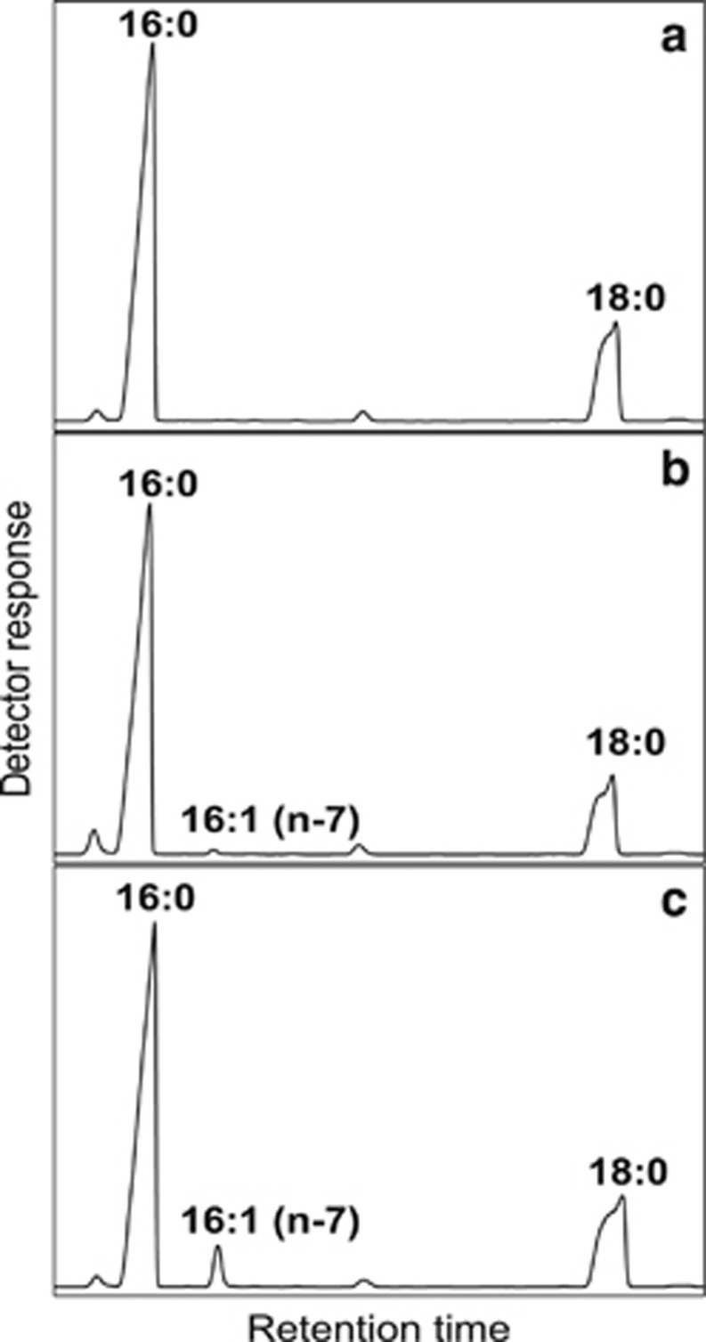 GC/FID analysis of FAMEs isolated from Ole1 yeast cells expressing vFADs. After lyophilization the esterified fatty acids were transesterified with sodium methoxide and analyzed by GC/FID (see Materials and methods). ( a ) Chromatogram of the control yeast, Ole1 transformed with an empty <t>pYES2/CT</t> vector. ( b ) Chromatogram of the Ole1 yeast expressing vFAD-I (marked with a gray arrow in Figure 2 ). ( c ) Chromatogram of the Ole1 yeast expressing vFAD-II (marked with a black arrow in Figure 2 ). For the chromatogram of the InvSc2 strain (containing an active ole1 gene) see Supplementary Figure 5 .