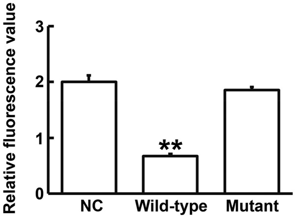 Fluorescence values of 293T cells transfected with wild-type or mutant 3′-untranslated region <t>DNA</t> sequences of MMP1 and antagomiR-222. Dual luciferase reporter assay was used to assess the interaction between miR-222 and MMP1. Data are presented as the mean ± standard deviation. **P