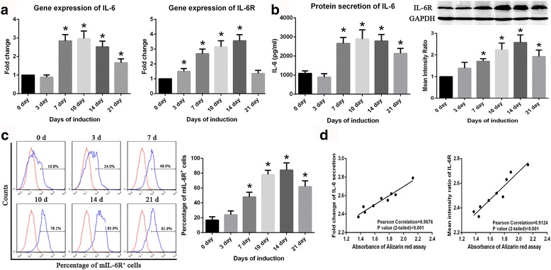 IL-6 and IL-6R expression in BM-MSCs during osteogenic differentiation. a Expression of IL-6 and IL-6R genes increased during osteogenic differentiation and peaked on day 10 or 14 of induction. b ELISA results showing that IL-6 secretion increases during osteogenic differentiation in BM-MSCs. Western blotting results showing that IL-6R expression in BM-MSCs peaked on day 14 of induction. c Results of flow cytometry showing that mIL-6R expression increases during osteogenic differentiation in BM-MSCs. d IL-6 and IL-6R expression are positively correlated with ARS staining results in BM-MSCs. Data are presented as the means ± SD of 15 samples per group. *Indicates P