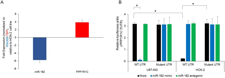 PPP1R1C is a bona-fide target of miR-182 in the glioblastoma cell line U87-MG (A) Steady state expression of miR-182 and PPP1R1C in U87-MG and HCN-2 cell lines were determined. Data was normalized to RNU6B and TBP expression, respectively. Fold expression in U87-MG cells was determined relative to expression in HCN-2 cell line. (B) Relative luciferase activity of transiently transfected luciferase reporter constructs containing either full-length or mutated (miR-182 binding site deleted) PPP1R1C 3′ UTR in U87-MG and HCN-2 cells, either mock transfected or transfected with miR-182 mimic or miR-182 antagomir. * p