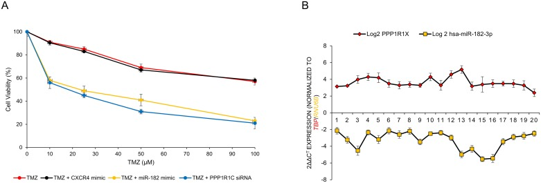 MiR-182 and PPP1R1C levels are inversely correlated in glioblastoma patients and their modulation can be used to increase sensitivity to temozolomide (TMZ) (A) U87-MG cells were either untransfected or transiently transfected with either CXCR4 mimic, miR-182 mimic, or siRNA against PPP1R1C for 12 hours. The cells were then treated with indicated doses of TMZ for 72 hours. Cell viability was assessed by the MTT assay. Each experiment was carried out at least 3 times. Data represent mean ± SEM. Data represent at least three independent experiments, each done in triplicate. (B) MiR-182 and PPP1R1C mRNA are inversely correlated in patients with glioblastoma. Pearson correlation demonstrating the inverse relation between miR-182 and PPP1R1C in paired samples (P