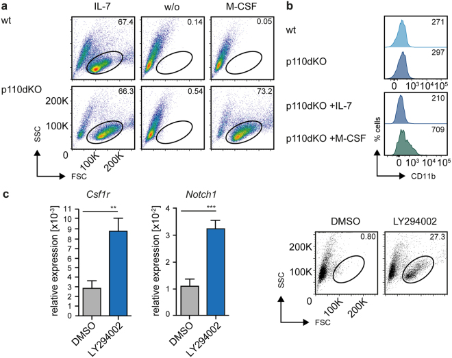 PI3K signaling regulates B cell commitment and plasticity. ( a ) Cells from bm-derived wt and p110dKO pre-B cell lines were cultured either in the presence of IL-7, M-CSF, or without cytokines and analyzed by flow cytometry. Numbers indicate percentages of cells in the respective regions at day 7 after beginning of treatment. (Data are representative of at least 3 independent experiments). ( b ) FACS-analysis of CD11b expression of measured in cells from bm-derived wt and p110dKO pre-B cell lines cultured in the presence of IL-7 (upper panel). p110dKO cells were cultured in IL-7 or M-CSF supplemented medium and CD11b expression was assessed by FACS analysis at day 8 after beginning of treatment (lower panel). ( c ) Cells from a bm-derived SLP-65-deficient pre-B cell line were treated with <t>LY294002</t> (30 μM) or solvent (DMSO) for 16 h and subsequently cultured in medium supplemented with M-CSF. Csf1r and Notch1 mRNA levels were determined with specific primers by qRT-PCR using the SYBR-Green detection method (left panel). Results are shown as mean ± SD of 2 independent analyses, run as duplicates. Statistical significance was calculated using the Mann-Whitney Test or the t-Test. Cells from the respective culture conditions were further analyzed by flow cytometry (right panel).
