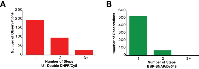 Counting statistics for the number of steps observed during loss of fluorescence from either U1-double DHFR or BBP-SNAP f binding events in three-color CoSMoS experiments. ( A ) Number of steps observed during loss of U1 fluorescence. Each U1 molecule contains two fluorophores, which can result in either 1 or two steps. 91% of U1 binding events are consistent with presence of only a single U1 molecule on the pre-mRNA. ( B ) Number of steps observed during loss of BBP fluorescence. Each BBP molecule contains a single fluorophore. 88% of BBP binding events are consistent with presence of only a single BBP molecule on the pre-mRNA.