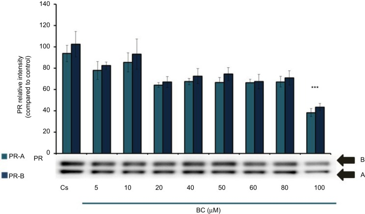Concentration-dependent effects of BC on PR-A/B levels. Notes: T-47D cells were cultured in RPMI-1640 medium supplemented with 10% FBS for 2 days followed by 6 days in media containing 5% DCC-stripped FBS with media changed every 48 hours. On the seventh day, cells were treated with BC for 24 hours at concentrations of 5–100 µM. Cellular protein extracts were prepared followed by protein quantification, SDS-PAGE, and Western blot analysis. The control lane, Cs, represents cells grown in the absence of ligands in media containing 5% DCC-stripped FBS. The relative intensity of PR-A/B protein, as compared to Cs, is displayed as the mean ± SEM. The asterisk indicates significant difference with respect to the control. *** p