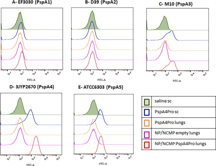 Binding of serum IgG to intact pneumococci. Sera from mice immunized with two doses of the indicated formulations were tested for the ability to bind to pneumococcal strains expressing PspA from clades 1 (A), 2 (B), 3 (C), 4 (D) and 5 (E). Results are shown as fluorescence intensity histograms and are representative of two experiments using sera from independent immunizations.