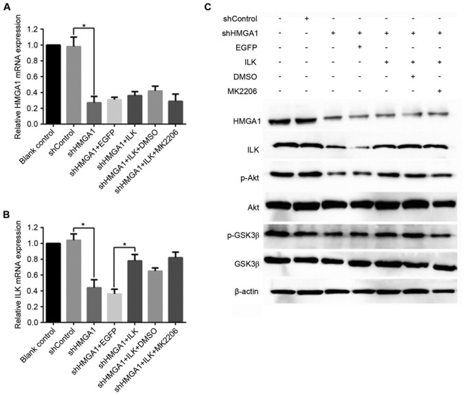mRNA and protein expression levels of HMGA1, ILK, p-Akt and p-GSK3β in MHCC97H hepatocellular carcinoma cells treated with shHMGA1, ILK expression vector and/or MK2206. Alterations in mRNA expression levels of (A) HMGA1 and (B) ILK were evaluated by reverse transcription-quantitative polymerase chain reaction. *P