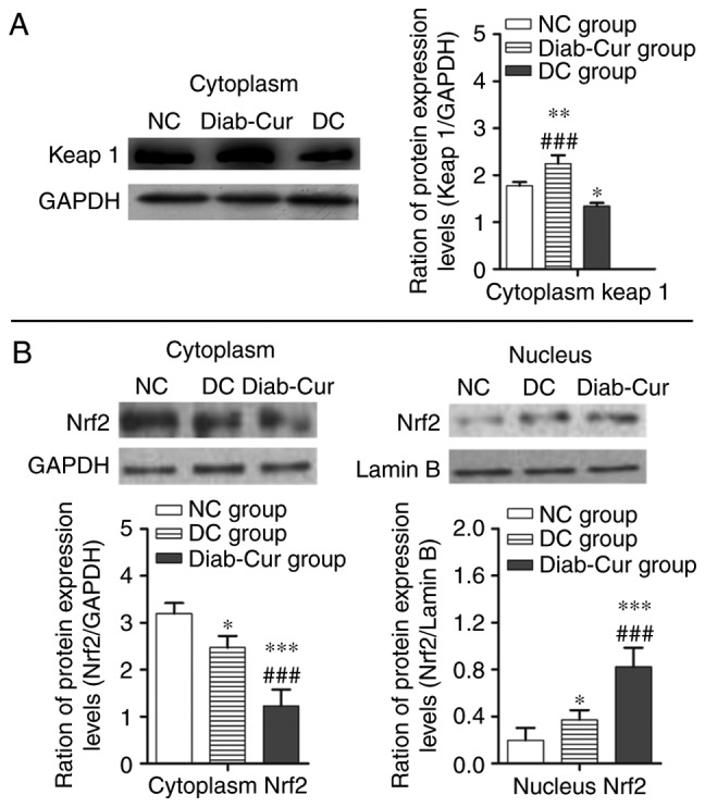 Protein levels of the <t>Keap1-Nrf2-ARE</t> pathway. (A) Keap1 protein; (B) Cytosolic and nucleic Nrf2 levels. The experiments used 18 samples from each group. Data are presented as the mean ± standard error. *P