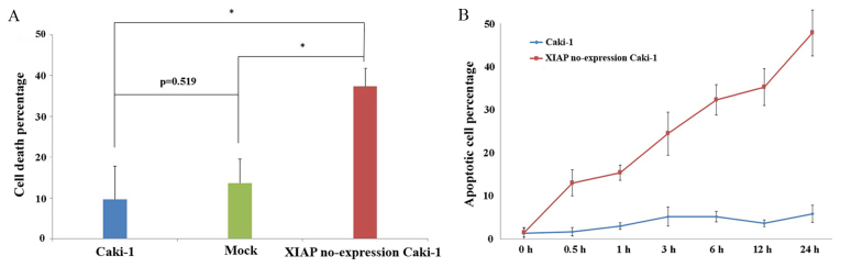(A) Cell death percentage of Caki-1, mock and RNA interference clone no.2 cells detected by MTT. (B) Time course measurement of the apoptotic cell percentage of Caki-1 and XIAP no-expression Caki-1 cells following Etoposide treatment. As assessed by flow cytometry. Data are expressed as the mean ± standard deviation. *P