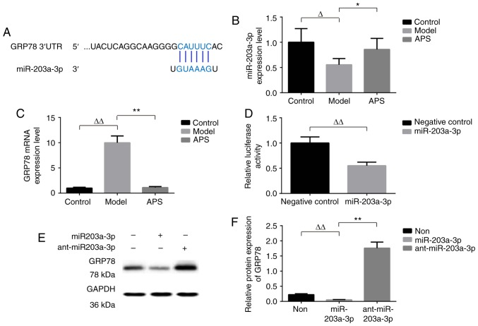 GRP78 is a target of miR-203a-3p. (A) The predicted binding sites of miR-203a-3p in the 3′-UTR of GRP78 mRNA. Expressions of (B) miR-203a-3p and (C) GRP78 mRNA were detected by RT-PCR analysis. (D) U6 and GAPDH were used as the internal control, respectively. n=8. <t>Dual-luciferase</t> <t>reporter</t> <t>assay</t> was performed to detect the interaction between miR-203a-3p and the 3′-UTR of GRP78. n=8. (E and F) miR-203a-3p inhibited the protein expression of GRP78, which was detected by western blot analysis, in infected with miR-203a-3p mimics or miR-203a-3p inhibitor (anti-miR-203a-3p). GAPDH was used as the internal control. n=3. Δ P